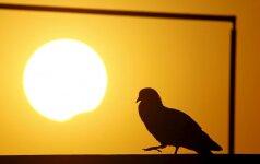 Lolitos prognozė rugsėjo 1 d.: dėl saulės užtemimo lengva nebus