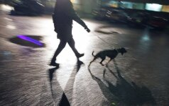 Neramios dienos šunų šeimininkams: siaučia įžūlus vagis, kuris prašo išpirkos