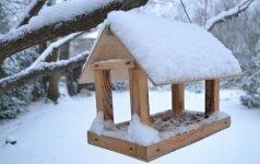 Geriausia, kai lesykla yra su stogeliu, tuomet ji labiau apsaugota nuo lietaus ir sniego.