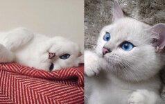 Pasaulį užbūrusi katė nepaliauja stebinti savo žvilgsniu