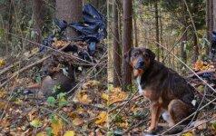Palikto šuns drama virpina vilniečių širdis: jau 2 metus nesitraukia nuo prie sodybos augančio medžio