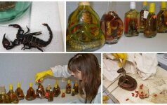 Muitininkų konfiskuotos gyvatės taps bandomaisiais triušiais