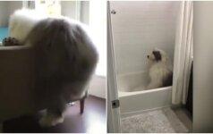 Nerangumas šuniui tapo sėkme: nuotaiką pakelia tūkstančiams internautų