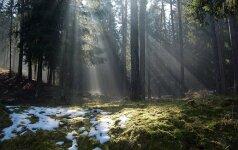 Nuomonė. Tik miškai, o ne girios Lietuvoj beošia