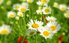 Astrologės Lolitos prognozė birželio 29 d.: ypatinga diena
