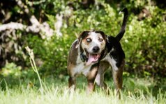 Pagaliau apsispręsta dėl privalomo gyvūnų ženklinimo: gyvūnų teisių aktyvistai perpykę