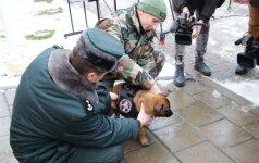 VSAT dovanojamas šunelis: mažasis atkeliavo net iš Nyderlandų