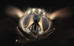 Paprasčiausias būdas atbaidyti vabzdžius su monetomis