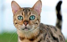 Kačių auklėjimo abėcėlė: kaip išvengti nepageidaujamo elgesio?