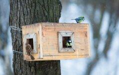 Darau pats: miniatiūriniai nameliai sparnuočiams
