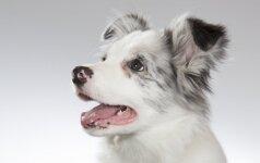 Kurių veislių šunys patys protingiausi