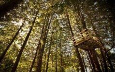 Kaip susimeistrauti namelį medyje