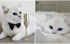 Katė, užbūrusi tūkstančius: turi gražiausias akis pasaulyje