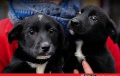 Du šuniukai – broliukas ir sesutė ieško namų