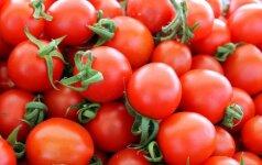 Kaip teisingai laistyti pomidorus?