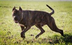Privaloma šunų ir kačių registracija – nuo sausio 1 d.