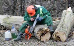 Pasaulio bankas: nelegalus miško kirtimas krauna didžiulius pelnus