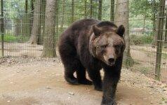 Grūto parke išvysti meškos jauniklius pavyksta tik kantriausiems