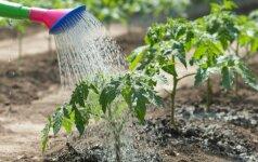 Nuo šių patarimų priklausys jūsų sodo grožis ir derlius