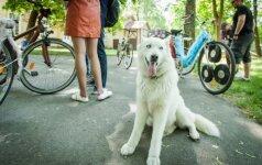 Sostinėje – akį traukiančių dviračių paradas