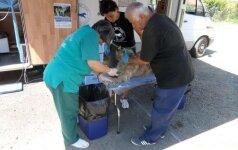 Rumunijos gyvūnų gerovės praktika: klinika, kuri padeda gyvūnams