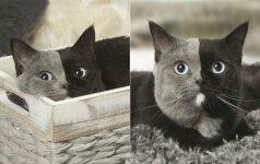 Neįprasta katės išvaizda užbūrė internautus