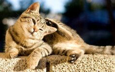 Negaluojančiai katei padėti nusprendusi moteris mirė po 10 dienų: tai pirmas toks atvejis