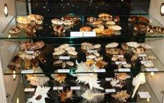 Kauno muziejus gavo 10 tūkst. kriauklių kolekciją, kuri netelpa į ekspozicijų salę