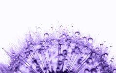 Ultra violetinė