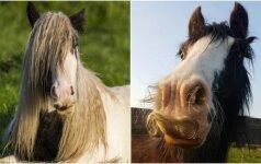 10 arklių, kuriems auga ūsai: internautai leipsta juokais