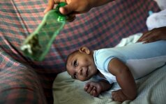 Bandymuose – viltis pažaboti Zikos virusą