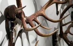 Keičiamas 8 metus Konstitucijai prieštaraujantis medžioklės įstatymas