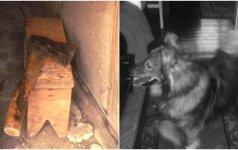 Pasibaisėtina šunelio egzekucija: šeštadienį gyvūnų mylėtojai kviečiami į piketą