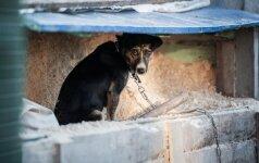 Šunį į konteinerį išmetusiam kauniečiui paskirta bauda