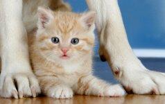 Rūkote jūs, o kenčia jūsų naminiai gyvūnai: didina įvairių ligų tikimybę
