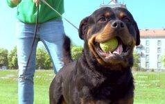 3 - ioji dresūros pamoka: kaip parodyti šuniui, kad dresūros komanda baigta?