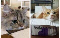 Smagios nuotraukos: ko reikia, kad katė jaustųsi laiminga? Dėžės!