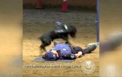 Pareigūnai pasidalino itin mielu įrašu: tarnybinis šunelis atlieka dirbtinį kvėpavimą