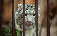 Spaudžiant šalčiams zoologijos sodų gyvūnams – riebesnis maistas ir šildomos patalpos