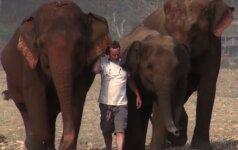 Nerealu: drambliai atbėga išgirdę savo gelbėtojo balsą