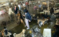 Žiauriausia pasaulyje šventė: nužudomi šunys iškepami, o vėliau suvalgomi