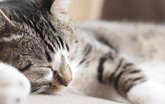 Mažai žinomi faktai apie kačių miegą