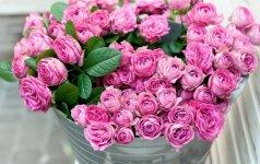 Sužinokite, kokia yra jūsų gimimo mėnesio gėlė
