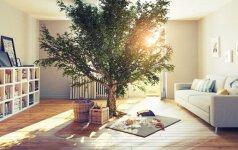 Į Lietuvos statybų rinką veržiasi pasyvūs namai