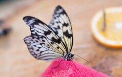 """""""Drugelių namai"""": galimybė pamatyti Lietuvoje neregėtus vabzdžius"""