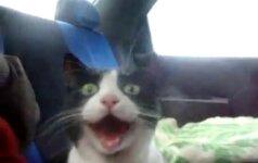 """Kas """"perskaitys"""" katės snukučio išraišką?"""