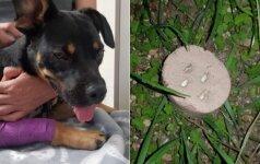 Aiškėja gyvūnų nuodytojo veidas: žiauriais darbais jis gyrėsi ir anksčiau