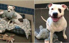 Paliktas šuo dalinosi liūdesiu su pliušiniu drambliu: žinia apie naujus namus jį pakeitė neatpažįstamai