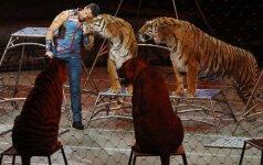 """Paskutinis legendinio cirko """"Ringling Bros and Barnum & Bailey Circus"""" pasirodymas"""