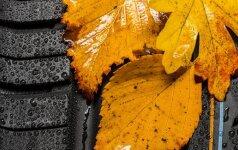 Ką būtina nuveikti sode, darže ir gėlyne spalio mėnesį